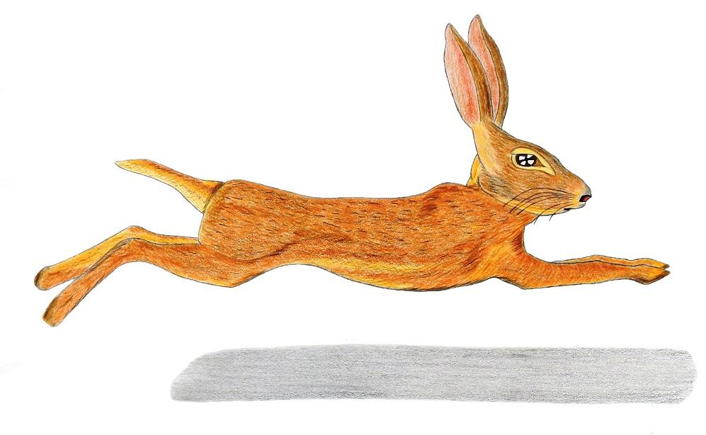 Lapin, illustration de Michael Nativel
